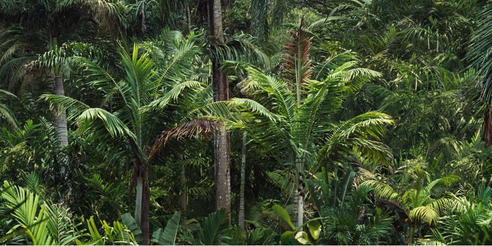 Jurassic World - Lush Tropical Tones